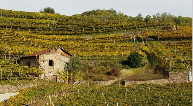 ALWG Vineyard Valle di Gresta, Trentino ITALY Photo: Francesca Neonato
