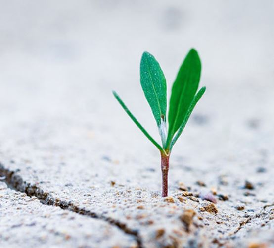 Green economic recovery - Reshaping business for nature and people 8-9 December 2020, Brussels
