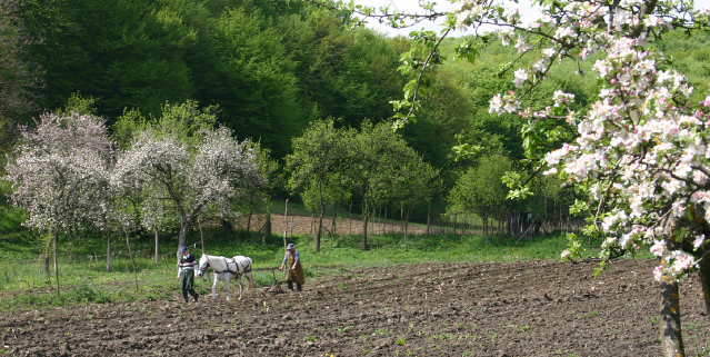Family farming Orseg, Hungary Photo: Albert Fekete, HALA Hungary
