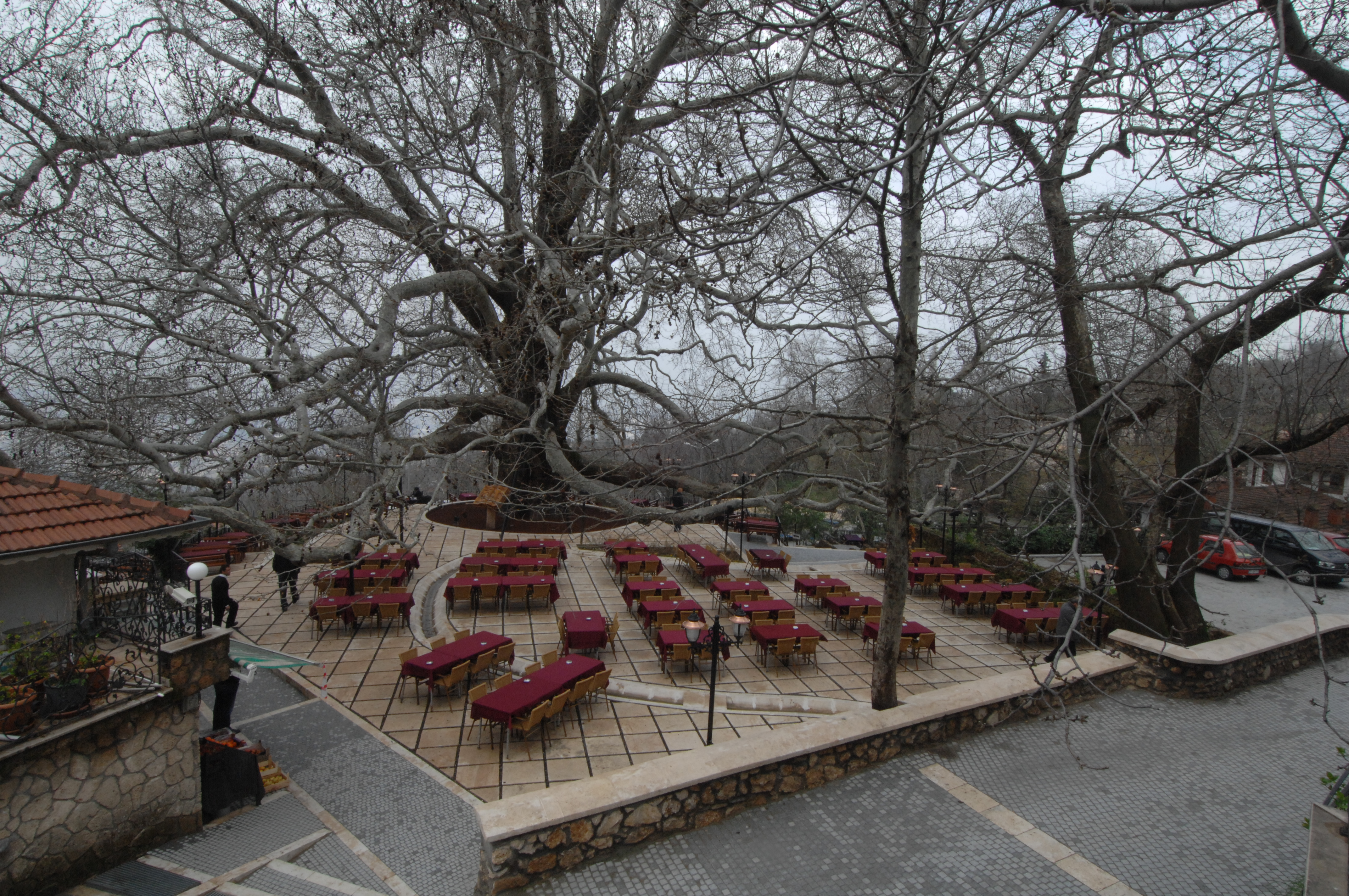 """IFLA Europe Exhibition """"Landscape as a Common Ground"""" continues - we present project from Turkey entitled: """"Plaza of monumental Inkaya Plane Tree""""!"""