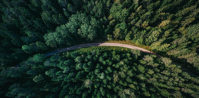 EU Forest Strategy: Strengthening forests for biodiversity & climate change