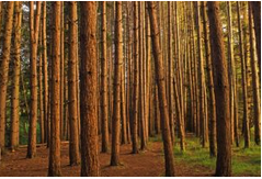 """UNISCAPE online lecture """"Agroforestry, energy plantations and landscape management: land use, biodiversity and wildlife habitats"""" 4 May 2021"""