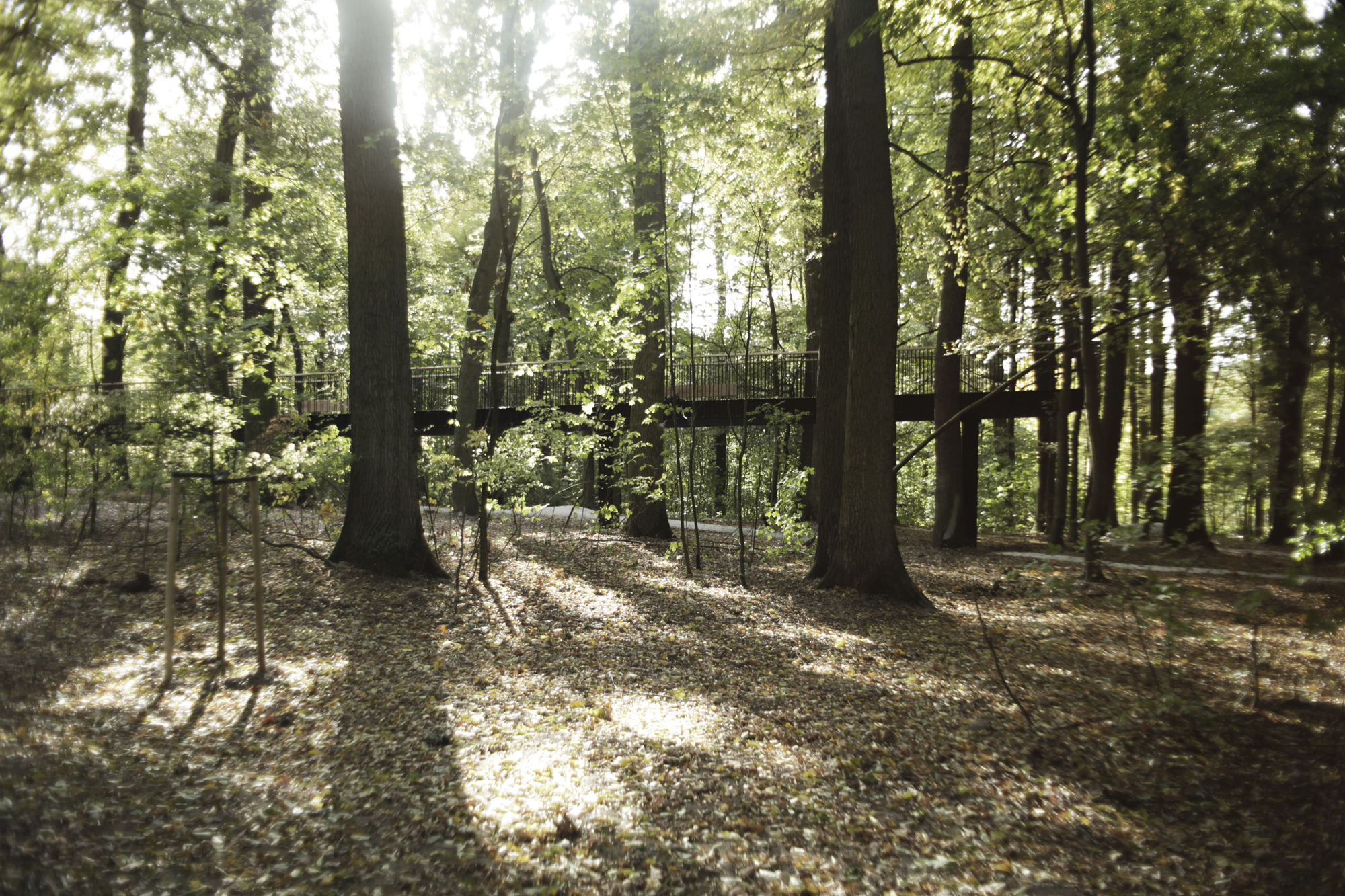 2020_Landscape_Architecture_Lab_Iława Forest_Category B